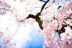 Spring (2).jpg