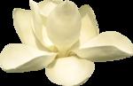 magnolia 21 (2).png