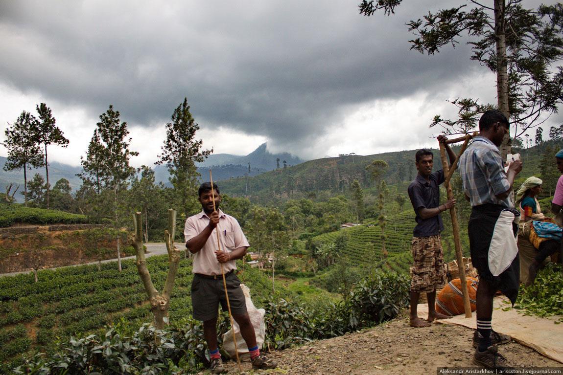 Шри-Ланка_Чайный замок_05