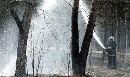Огнеборцы ликвидируют возгорание в лесу