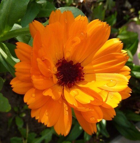 Все живет и цветет для Кришны