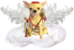 CUPID PUP.png