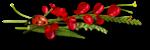 ldw_poppymeadow_cluster8b.png
