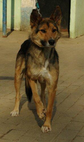 Балашиха (МО). Найдена собака с травмированными лапками…