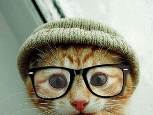 Сайты о котах