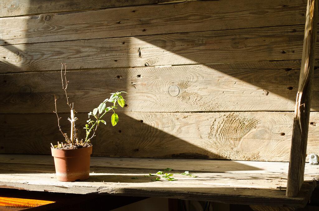 Натюрморт при освещении из окна. Вариант 1. Снято на любительскую зеркальную камеру Nikon D5100 KIT 18-55 VR.
