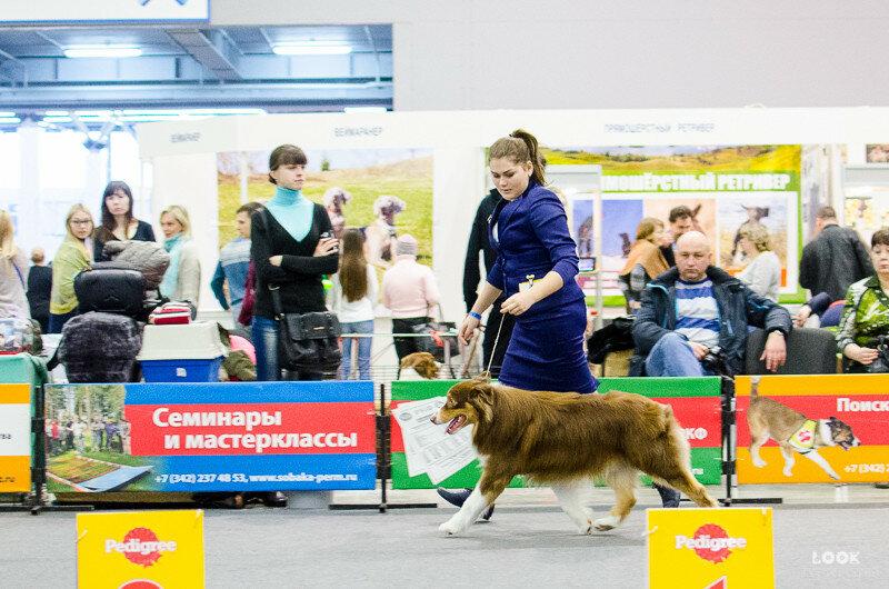 CACIB 31.01.2016 Пермь 0_b1a1c_1a5cf295_XL