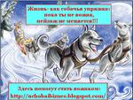 Упряжка собак.png
