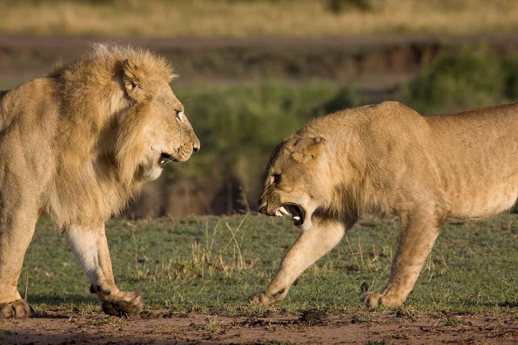 Разборки в Африке