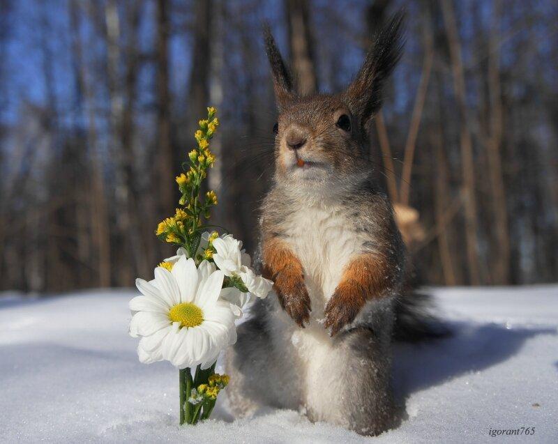 посещения картинки весна животные на снегу сможете скачать красивые