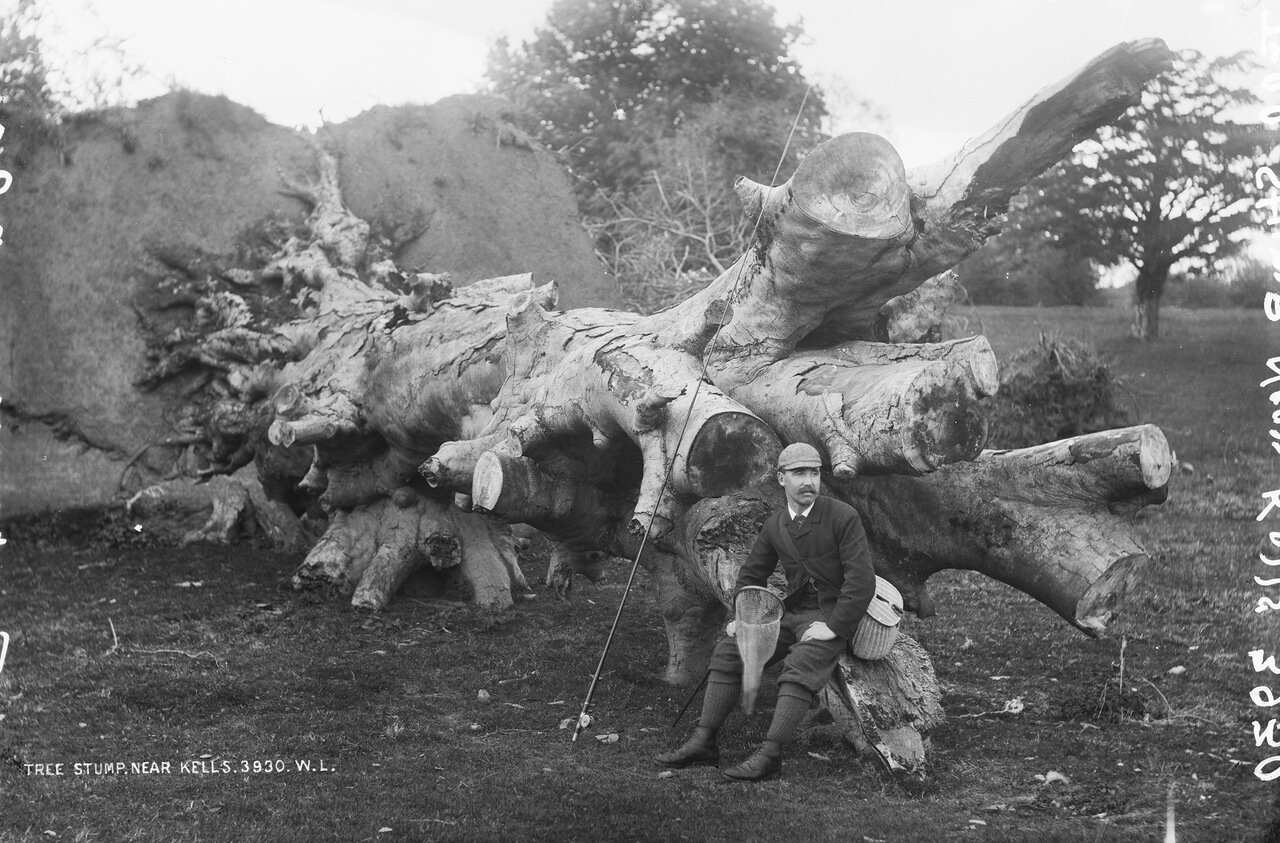 Пенек где-то возле Келлса, графство Мит, 1880-е.