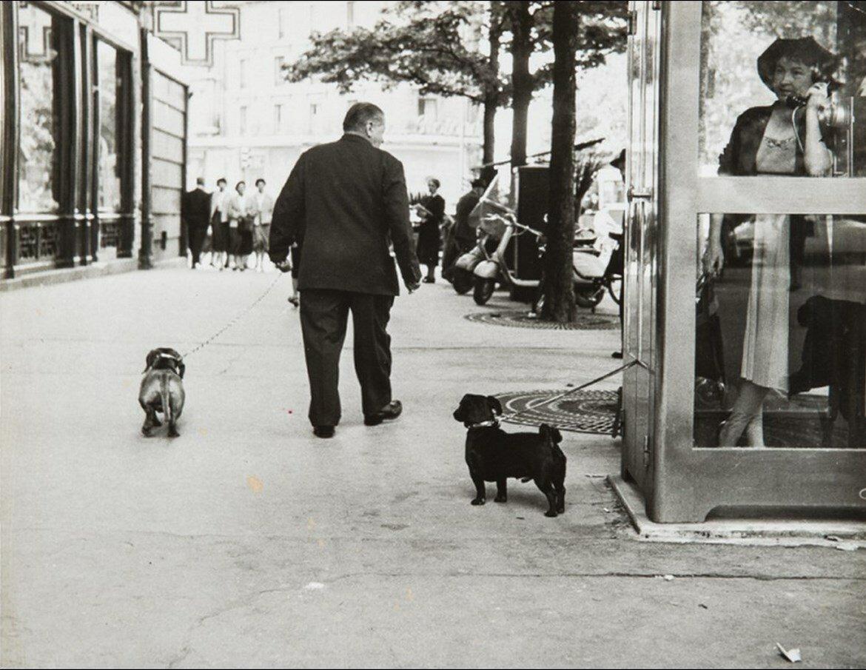 1960. Собачья жизнь