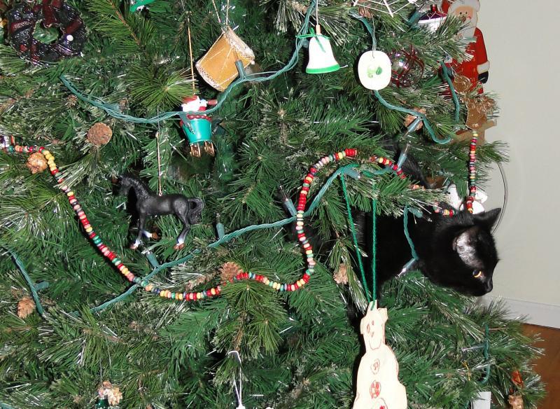 Коты на ёлке - фото 19