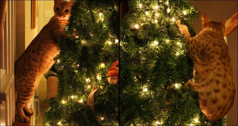 Коты на ёлке - фото 39