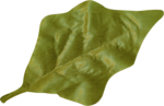 KAagard_WinterWonderland_Leaf2.png