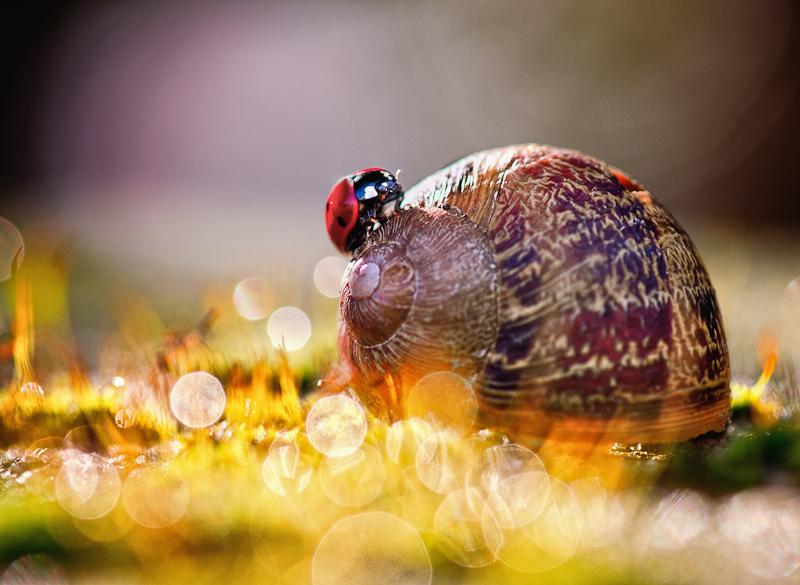 Beautiful Nature Photographs by BLOAS Meven