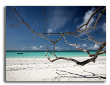 Сейшелы.  Seychelles coast. Фото Daniel Nagy - Depositphotos