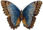 nb_vp_butterfly.png