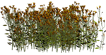 Lug_Grass_Flower (26).png