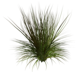Lug_Grass_Flower (69).png