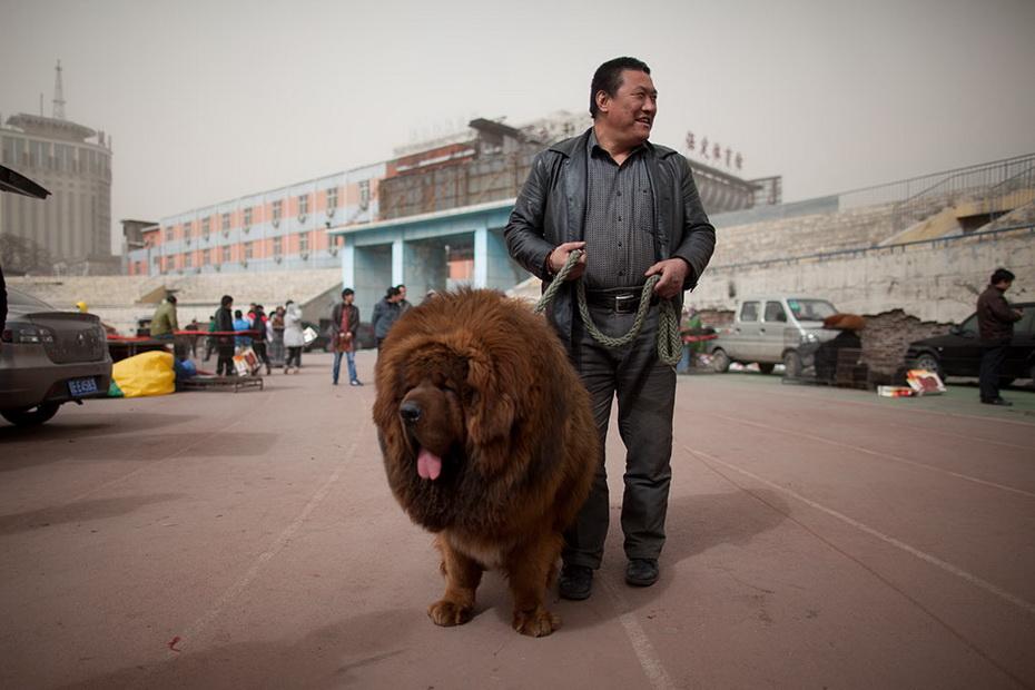Собака за миллион долларов