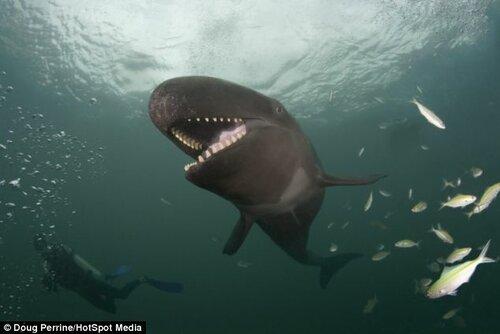 Огромный кит и его огромная улыбка