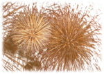 mds7693 Fireworks Foto by Bernd_.png