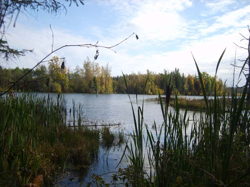 Лызлово (Рузский район), запруженная река Гнилуша