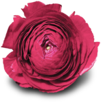 RR_HeartWhispers_Element (55).png