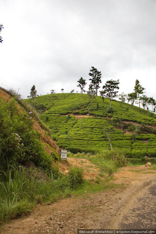 Шри-Ланка_Чайный замок_02
