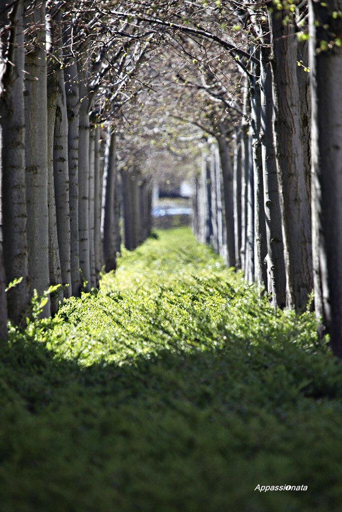 Весна в Дании