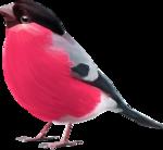 ldw_scc_addon-bird.png