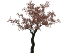 cherry-tree-01.png