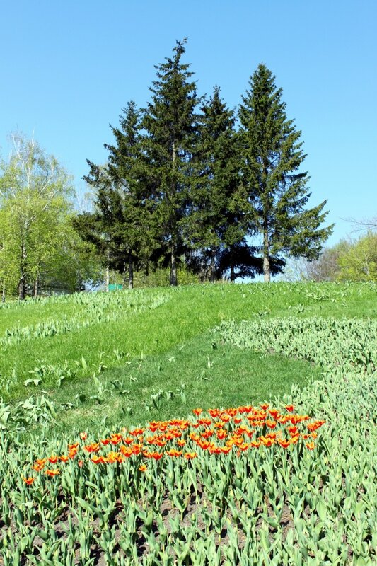 Выставка тюльпанов Весенняя феерия
