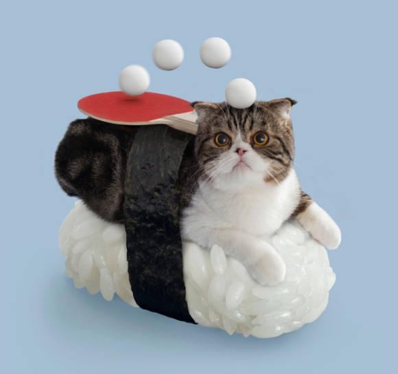 некодзуши, котики, кавай разливной, nekozushi, мимими, приласкать кисоньку