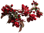 feli_btd_red flowers branch2.png