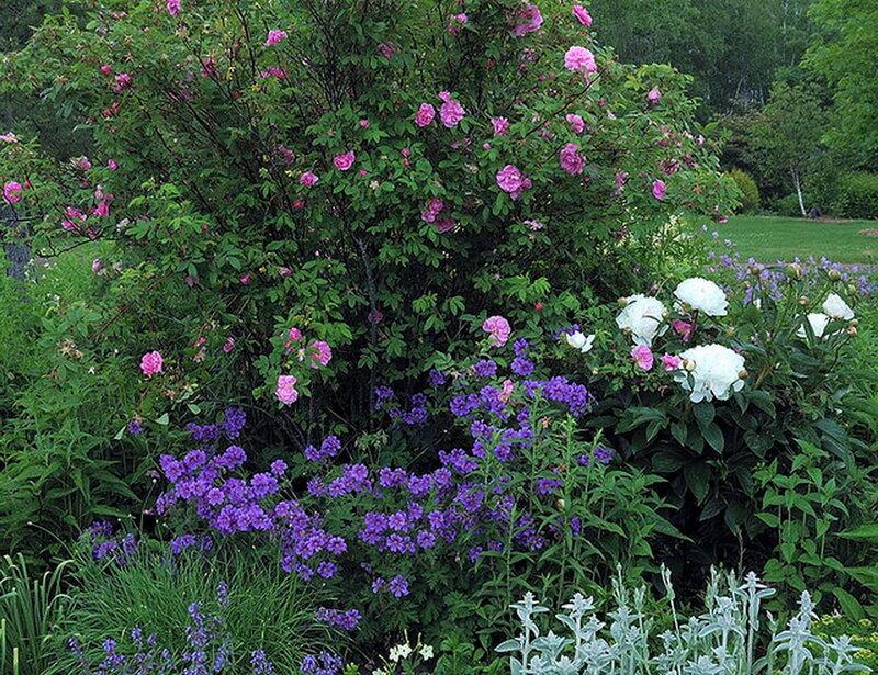 английские сады парки цветники  смотреть бесплатно