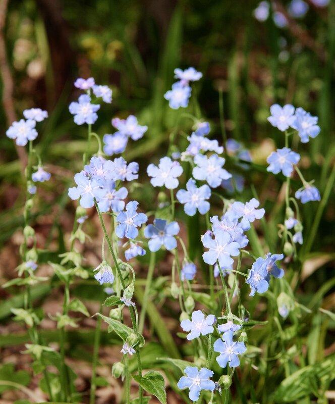Какието цветочки