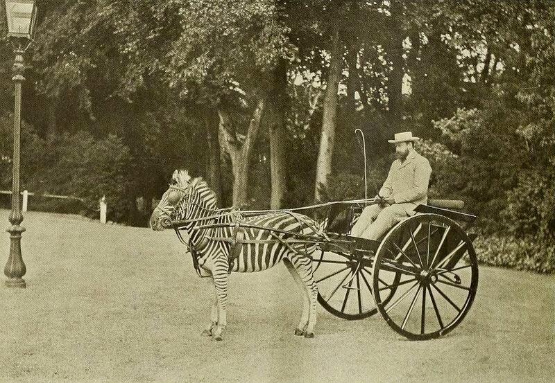 lord walter rothschild 1905 by Captain Geoffrey Spaulding