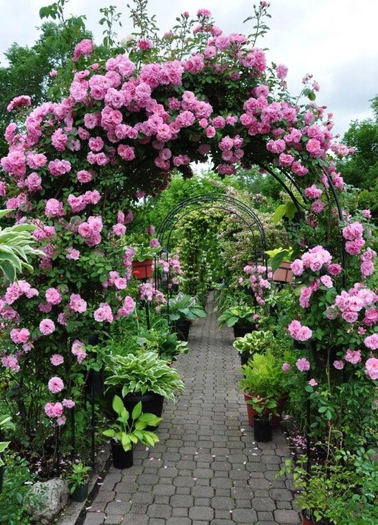 арки для роз фото