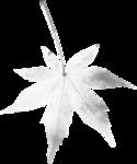 растения в снегу (4).png