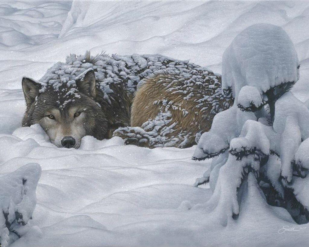 Воют волки картинки 8