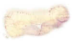 ldavi-wheretonowdreamer-mapclouddoodleoverlay1a.png