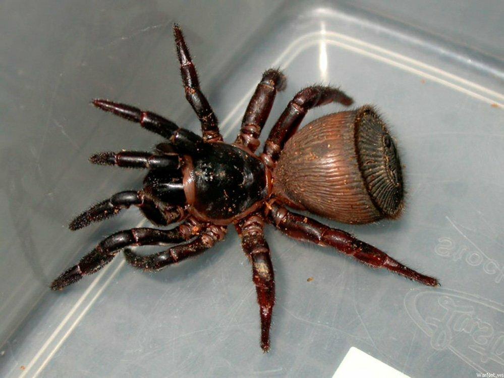 Картинки по запросу паук