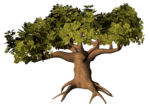 GC_EF_tree_5.png