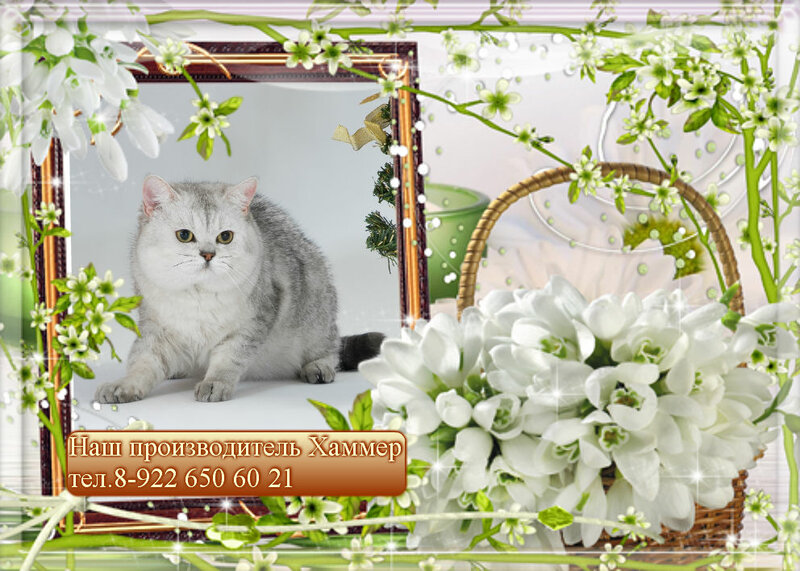 http://img-fotki.yandex.ru/get/5633/176414878.3/0_bc2bb_fb2c9c79_XL.jpg.jpg