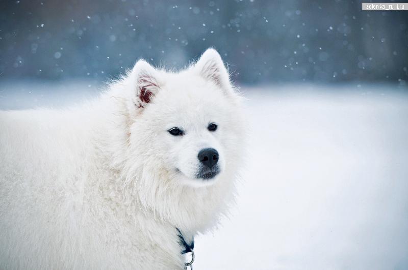 пофотографирую Ваших собак! - Страница 5 0_143053_60623d3b_orig