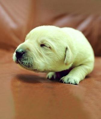В Британии родился щенок зеленого цвета