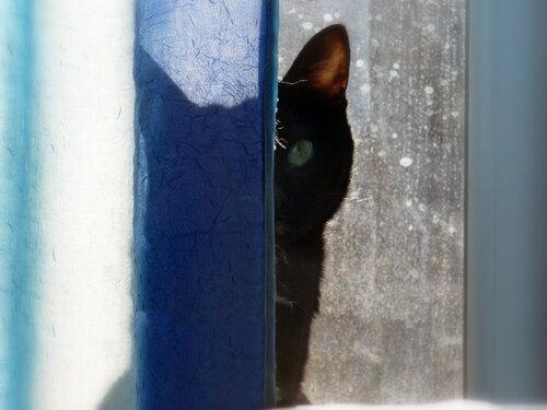Кошка и ее тень...