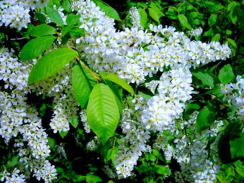 А сумасбродная весна нас опьяняет без вина….